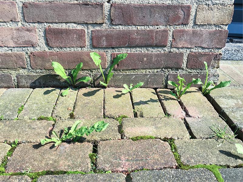 tuintip action onkruidbrander On huismiddel tegen onkruid tussen tegels