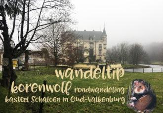 Wandeltip: korenwolf rondwandeling bij kasteel Schaloen in Oud-Valkenburg - ©debbieschrijft.nl