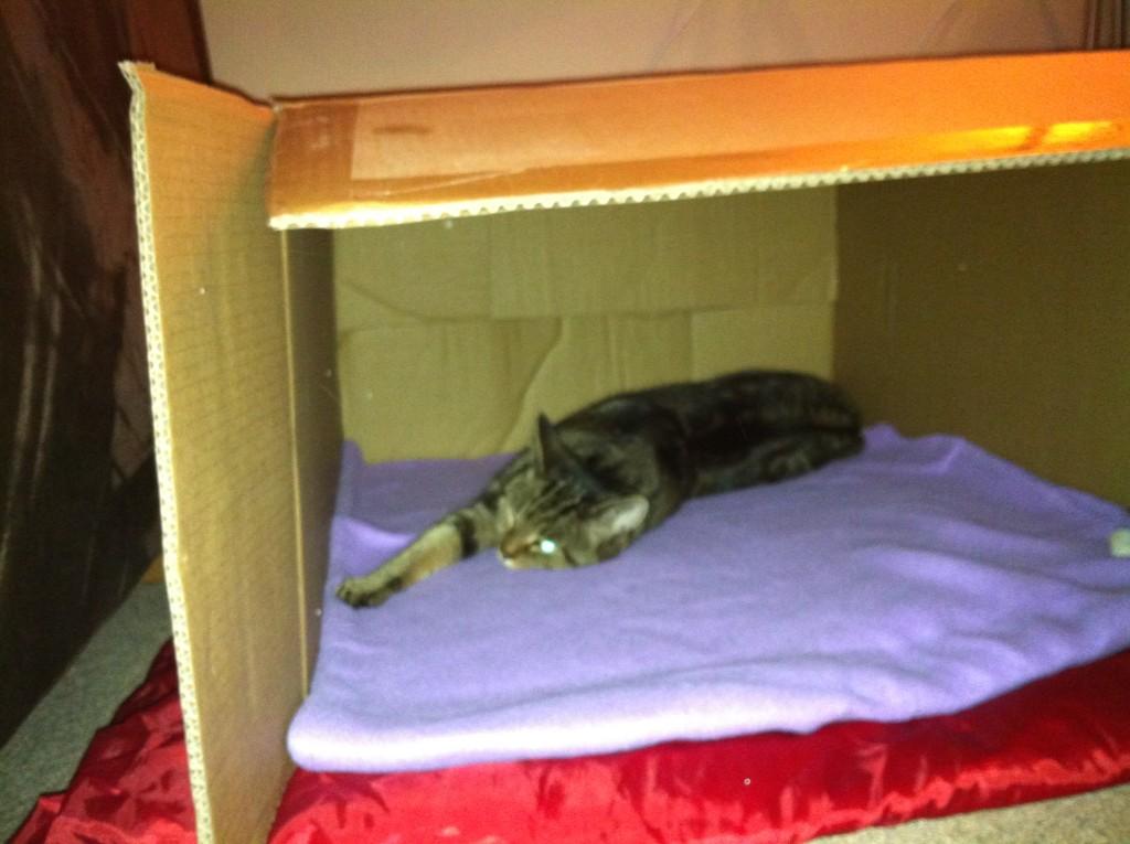 Luna in haar doosbench