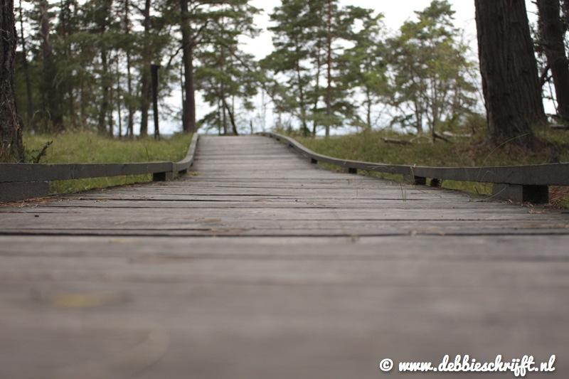 Zomaar een houten wandelpad over drassige grond.