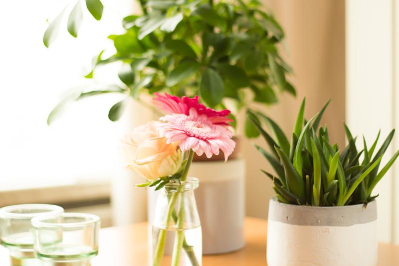 Detail-roze-bloem