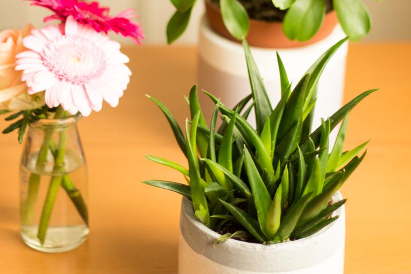 Detail-vetplant