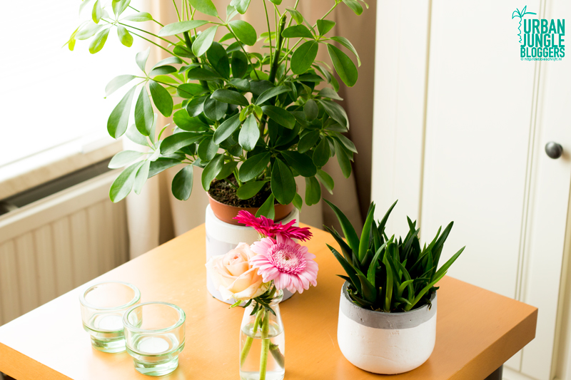 Snijbloemen-en-planten