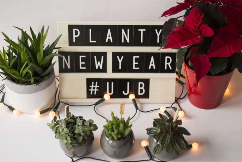 Have a planty new year! Urban Jungle Bloggers