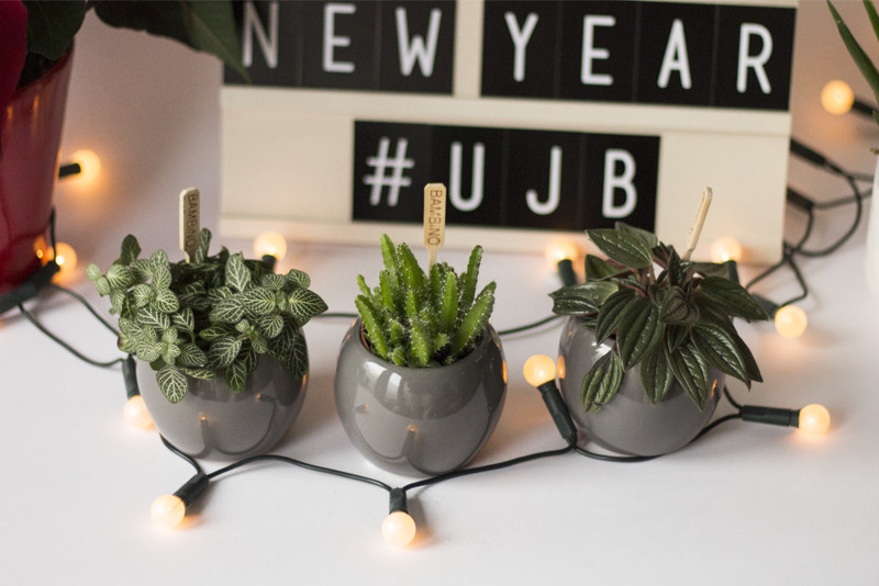 Have a planty new year! #UJB