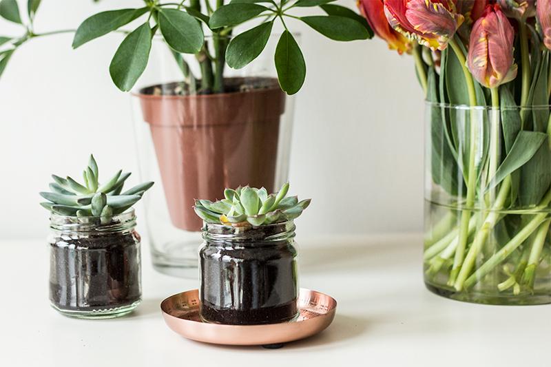 Urban Jungle Bloggers | Plants & Glass